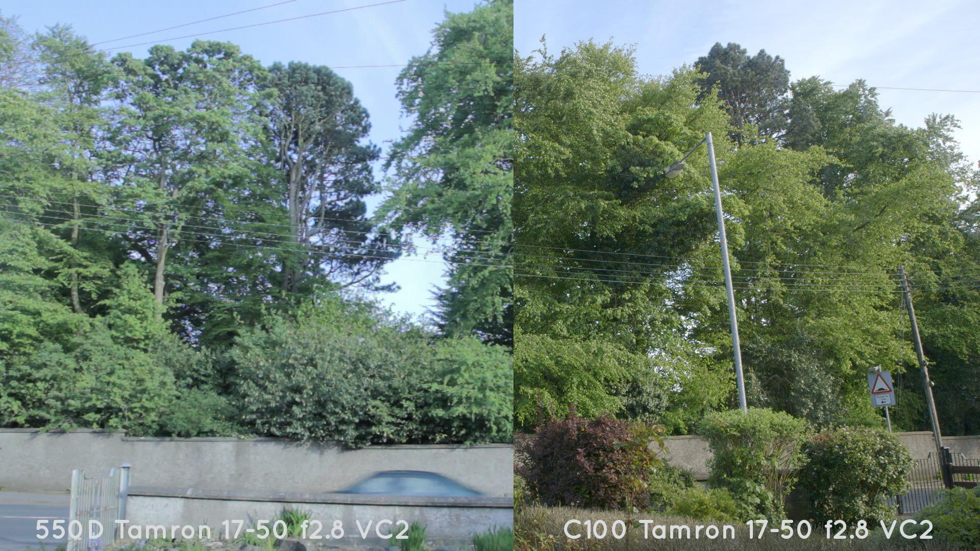 trees_C100_550d